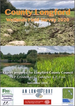 Longford 2020 report web a image